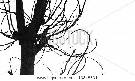 Tree Branches Isolated On White