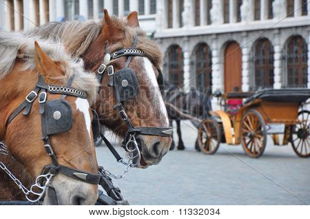 Two Horses with Vehicle