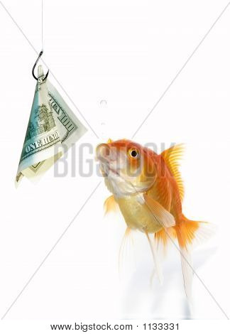 1Gold Fish And Dollar