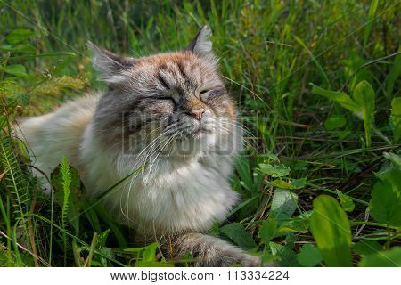 Sulfur cat blissfully basking in the sun in a green grass