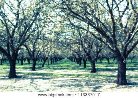 Orchard Blur