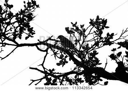 Bird sitting in tree silhouette