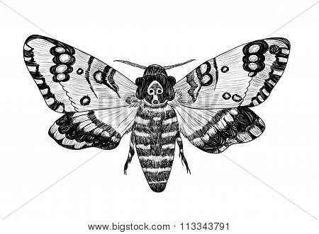 Death's-head Moth On A White Background.eps
