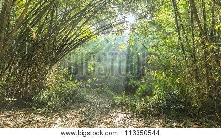 Bamboo corner Vietnam village