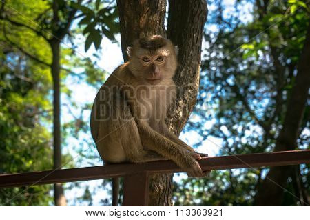 Lovely Monkey Sitting