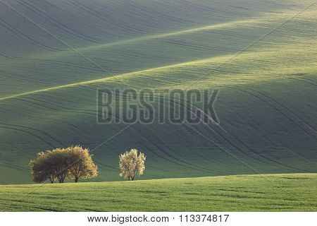 Amazing waves of hills and green and blossom trees - fresh green landscape, light and shadow