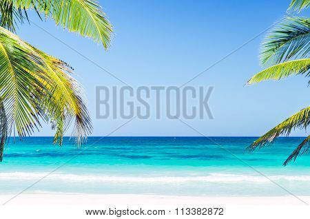 Tropical Seaside View And Palm