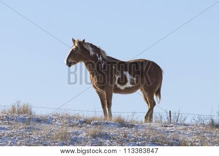 Horse in a winter pasture