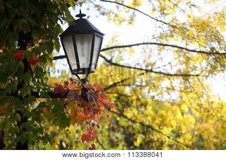 Beauty Of Autumn Trees