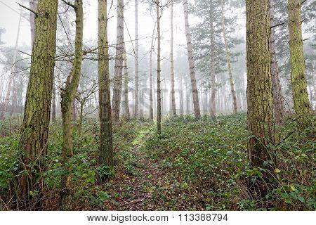 Path Through A Misty Wood