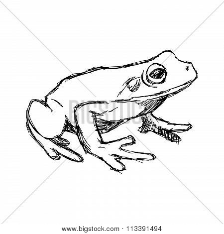 Illustration Vector Hand Drawn Doodle Frog Isolated On White