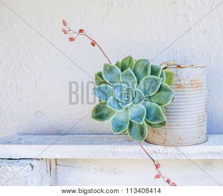 Succulent Pot Plant On Shelf Outside
