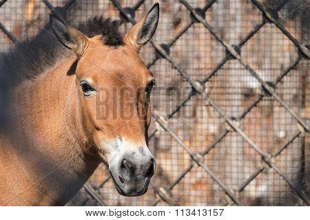 Big Head Or Muzzle Of A Horse