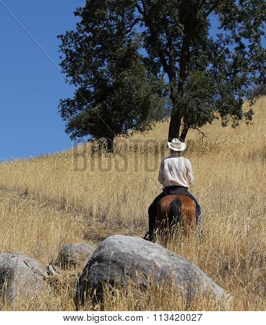 A cowboy and horse riding a trail.