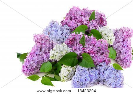 Lilac Bouquet Several Colors Over White Background Syringa Vulgaris