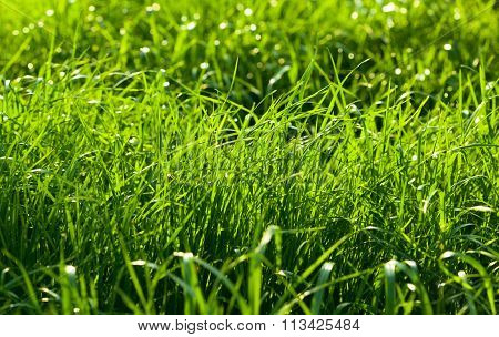 Meadow In Sunny Day
