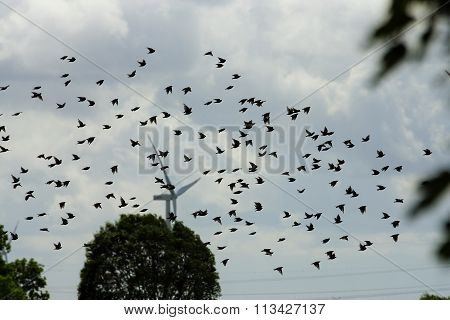Swarm of birds