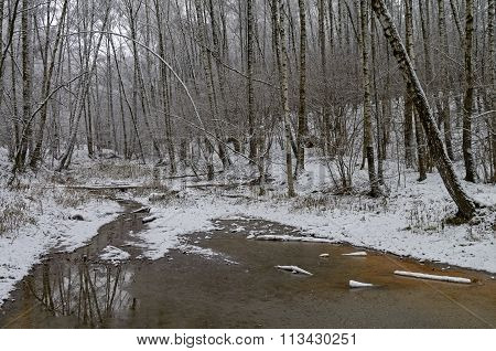 The Mouth Of A Small Forest Stream.