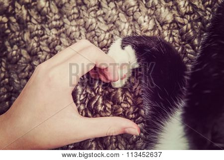 Person's hand and a cat's paw making a heart shape.  Instagram toned image