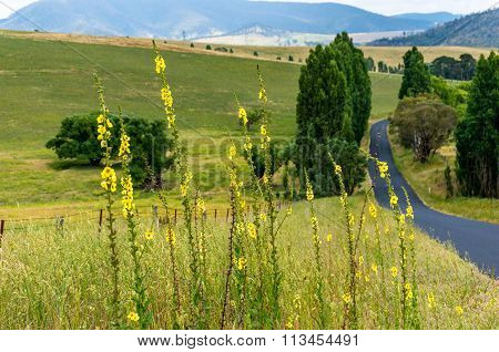 Australian outback road. Rural unmarked road with yellow flowers. Selective focus shallow DOF. Lithgow region Blue Mountains NSW Australia