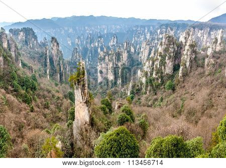scene of rock mountain in Zhangjiajie National Forest Park,Hunan