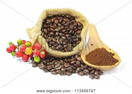 Coffee beans and and coffee powder.