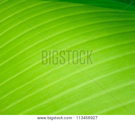 Leaf And Background