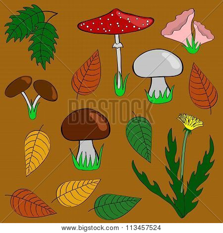 Mushrooms, leaves and plants