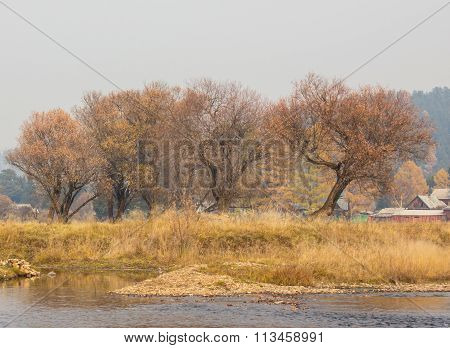 naked autumn trees near river