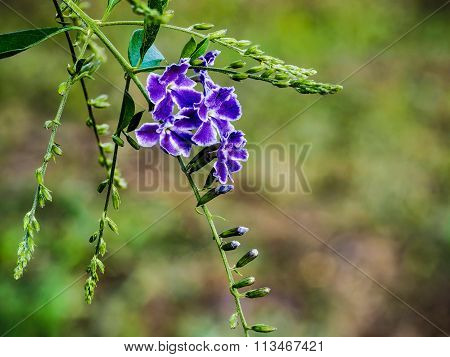 Golden Dew Drop Flowers