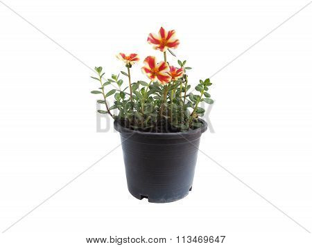 Beautiful Two Color Flowers