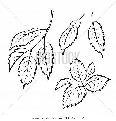 Elm Leaves, Pictogram Set