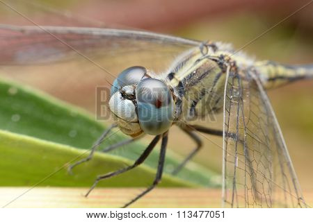 The Eyes Of A Dragonfly In The Near Term