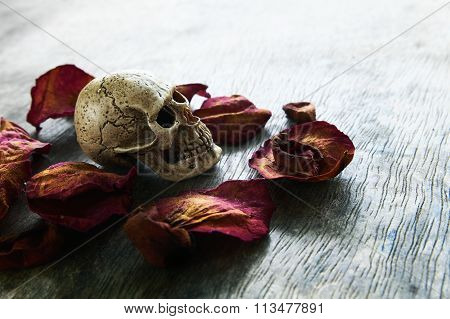 Abstract  withered rose with skull