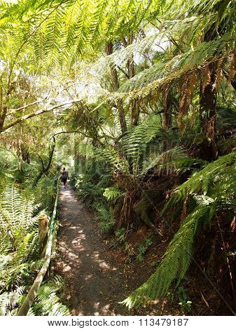 View down the 1000 steps at the Dandenong ranges