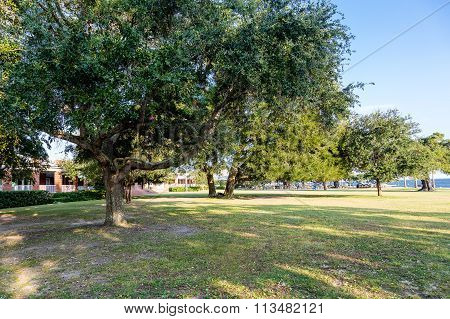 Oak Trees In Coastal Park