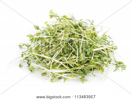 Garden Cress (isolated On White)