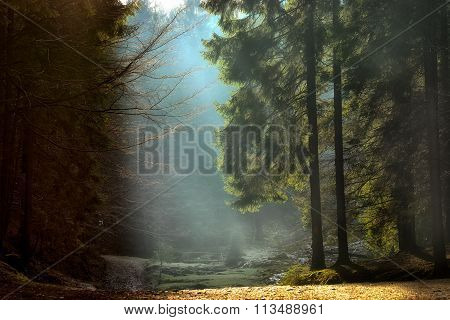 Light Rays Through The Trees . Late Autumn Landscape , A Walk Through The Woods Near Brasov. Romania