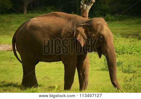 Long shot of an elephant