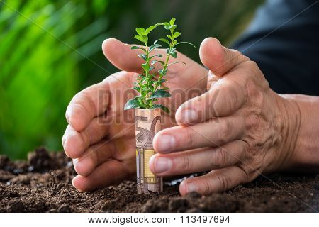 Businessman's Hands Protecting Plant Rolled With Euro Note