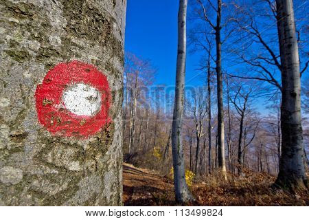Forest Hiking Trail Path Marking