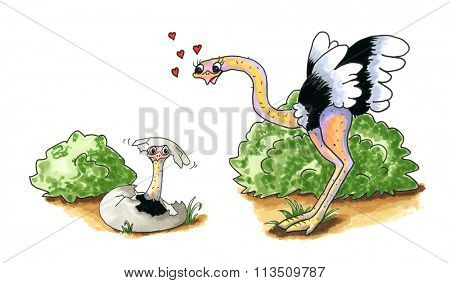 Cartoon of hand drawn Ostrich with baby in egg isolated over white background