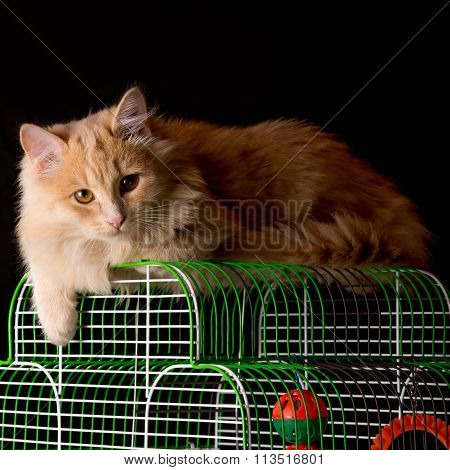 Red Cat Lays On The Cage With A Parrot.