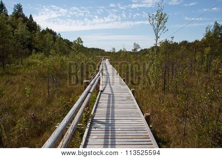 Wooden plank path