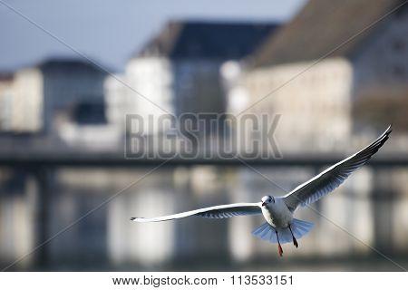 Bird flying in the city