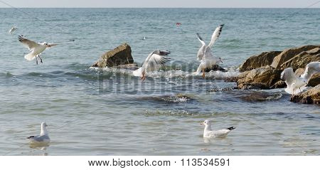 White seagulls flying over the sea waves