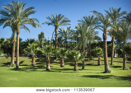 Green Park Of Palm Trees