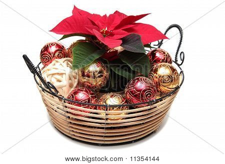 Christmas Pointsettia