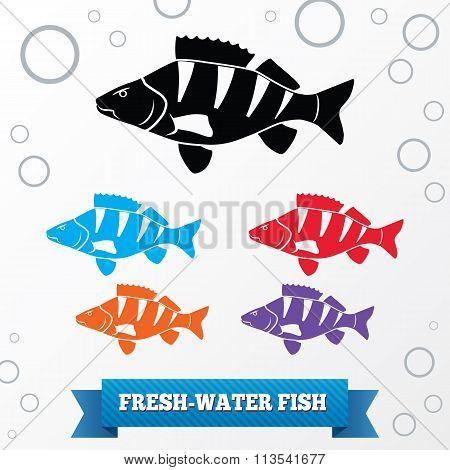 Fish icon set. Perch, redfin perch. Percidae family. Food, animal symbol. Black, red, lilac, blue, o