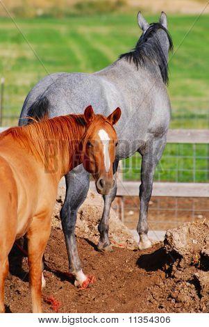 Horses on guard